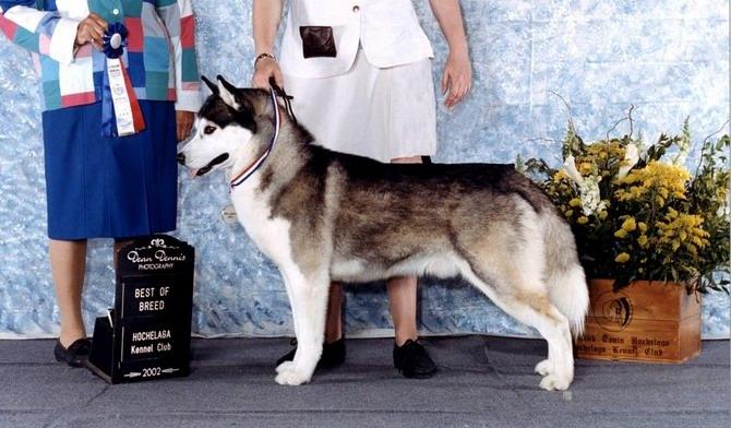 Dog Show Titles Abbreviations